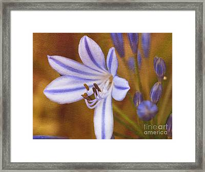 Agapanthus In Painting Framed Print