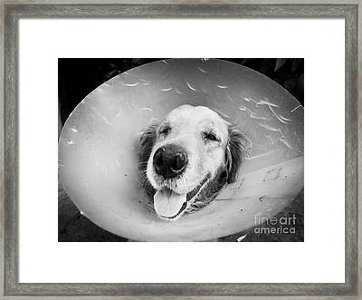 Agape Dog With Funnel Framed Print by Anon Pichittanabodeekun