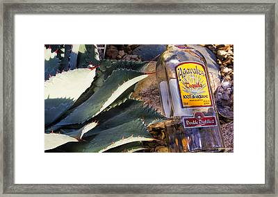 Agava Framed Print by Pat Cook