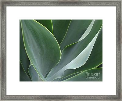 Framed Print featuring the photograph Agave 3 by Ranjini Kandasamy