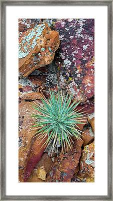 Agave And Lichened Rocks, Grand Framed Print by Panoramic Images