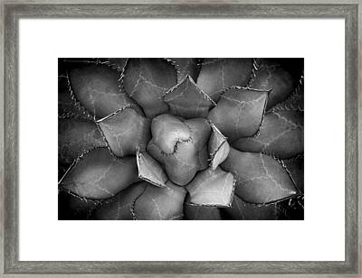 Agave Black And White Abstract Framed Print by Adam Romanowicz
