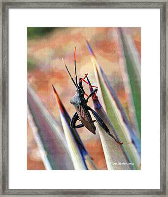 Framed Print featuring the photograph Agave Bug  by Tom Janca