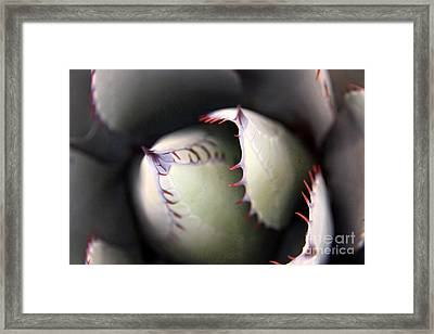 Framed Print featuring the photograph Agave Cactus by Ron Chilston
