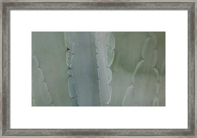 Agave Closeness Framed Print