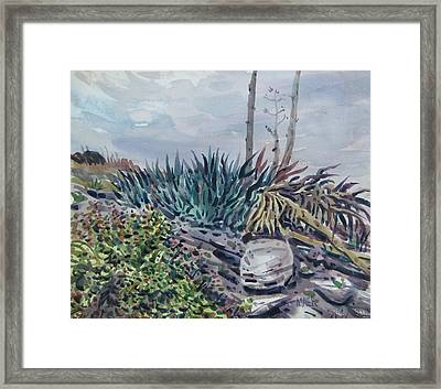Agave Framed Print by Donald Maier