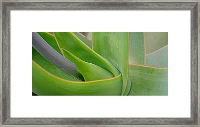 Agave Flow Framed Print