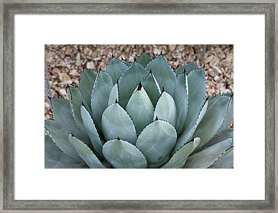 Framed Print featuring the photograph Agave by Lana Enderle