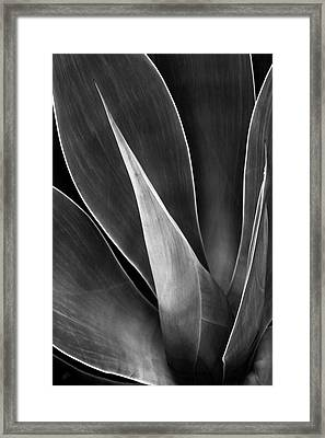 Agave No 3 Framed Print by Ben and Raisa Gertsberg