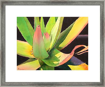 Agave Framed Print by Robert Hooper