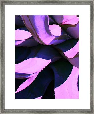 Framed Print featuring the photograph Agave by Steve Godleski