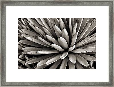 Agave Toned Bw Framed Print by Kelley King