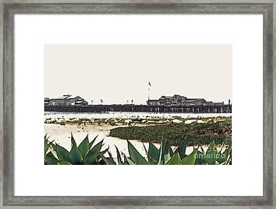 Agaves At The Wharf Framed Print