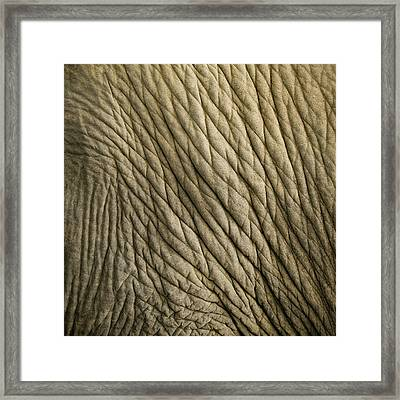 Age Beautiful Framed Print by Steve Smith