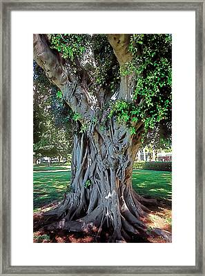 Age Lines Framed Print by Terry Reynoldson