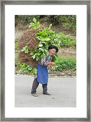 Aged Female Tibetan Subsistence Farmer Framed Print by Tony Camacho
