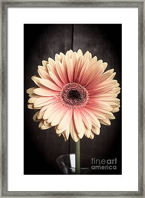 Aster Flower Framed Print by Edward Fielding