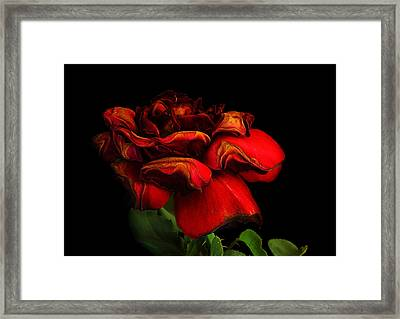 Ageing Beauty Framed Print