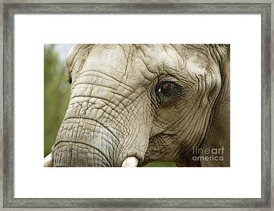 Ageless Beauty Of The Animal Kingdom Framed Print by Inspired Nature Photography Fine Art Photography
