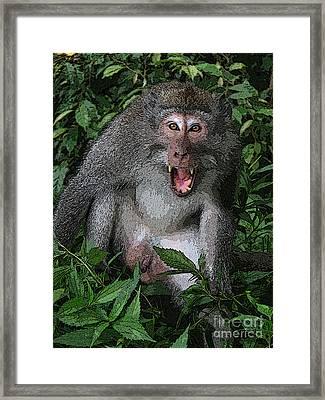 Aggressive Monkey From Bali Framed Print by Sergey Lukashin