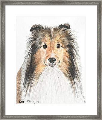 Agility Dog Sheltie In Pastel Framed Print