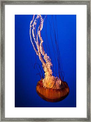 Aglow Within Framed Print