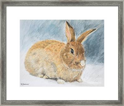 Agouti Pet Rabbit Framed Print by Kate Sumners