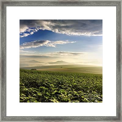 Agricultural Landscape. Sunflowers. Auvergne. France. Framed Print by Bernard Jaubert