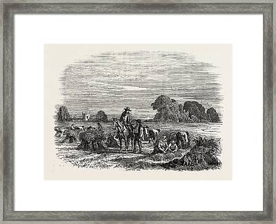 Agricultural Pictures Wheat Harvest Framed Print