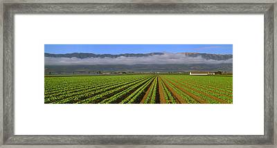 Agriculture - A Mid Growth Green Leaf Framed Print by Timothy Hearsum