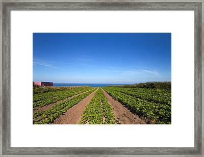 Agriculture, Ardmore Head, Waterford Framed Print by Panoramic Images