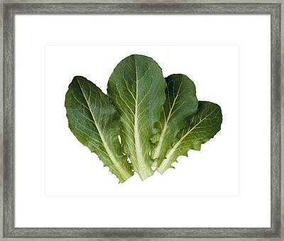 Agriculture - Baby Green Romaine Leaves Framed Print