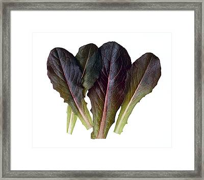 Agriculture - Baby Red Romaine Leaves Framed Print by Ed Young