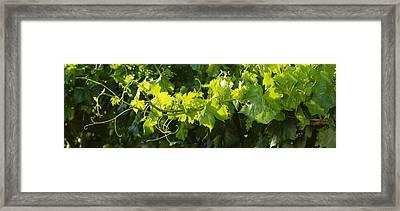 Agriculture - Closeup Of A Backlit Framed Print