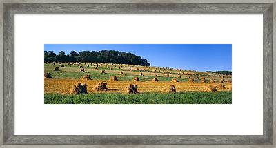 Agriculture - Contour Strips Framed Print by Timothy Hearsum