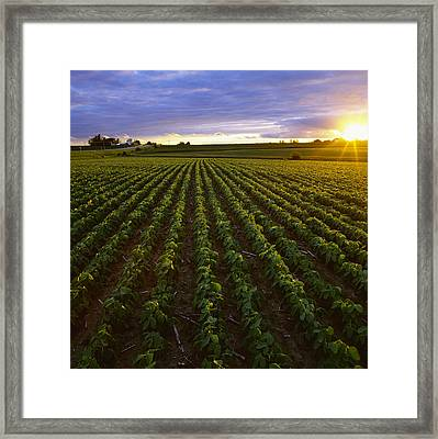 Agriculture - Early Growth Minimum Framed Print
