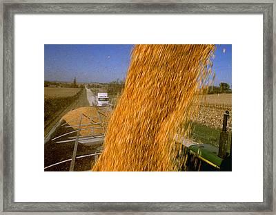 Agriculture - Harvested Grain Corn Framed Print