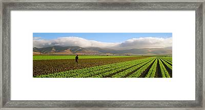 Agriculture - Mature Field Framed Print by Timothy Hearsum