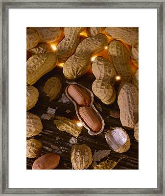 Agriculture - Mature Peanuts On Wood Framed Print by John Wigmore
