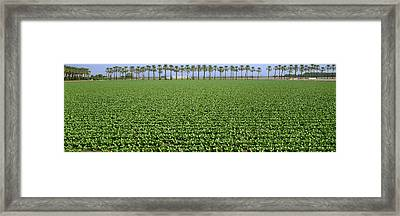 Agriculture - Mid Growth Field Framed Print by Timothy Hearsum