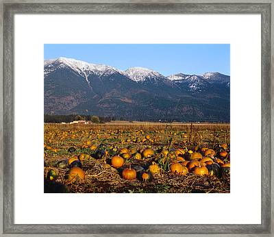 Agriculture - Pumpkin Patch In Autumn Framed Print by Chuck Haney