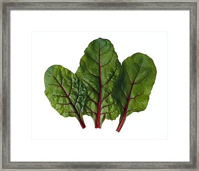 Agriculture - Red Chard Leaves Closeup Framed Print by Ed Young