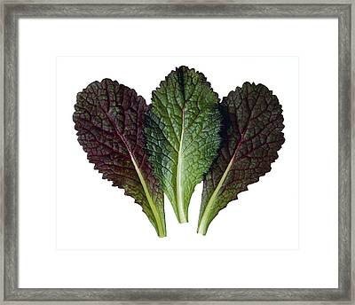 Agriculture - Red Mustard Leaves Framed Print by Ed Young