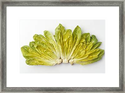 Agriculture - Romaine Lettuce Hearts Framed Print by Ed Young