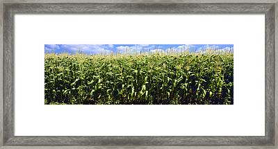 Agriculture - Sideview Of A Stand Framed Print