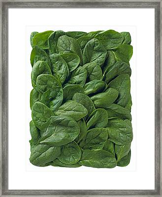 Agriculture - Spinach Leaves Arranged Framed Print by Ed Young