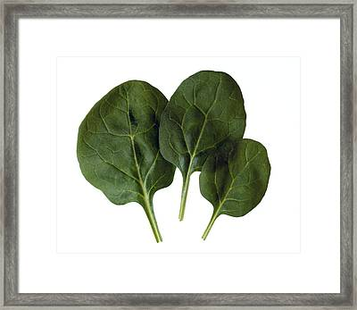 Agriculture - Spinach Leaves Closeup Framed Print