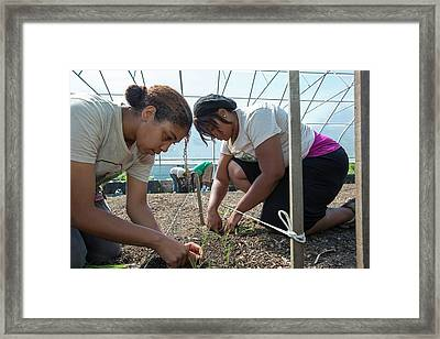 Agriculture Students Planting Onions Framed Print by Jim West