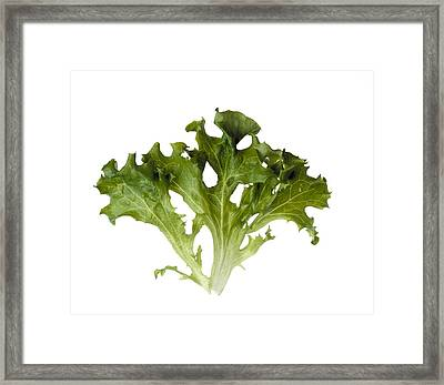 Agriculture - Tango Leaves Closeup Framed Print by Ed Young