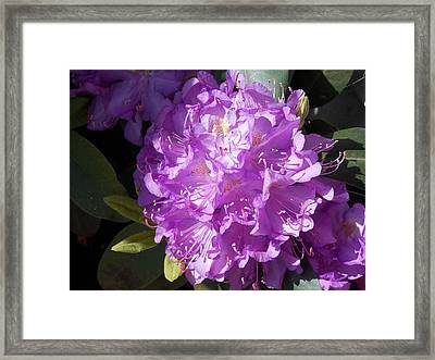 Ah Rhododendron Framed Print